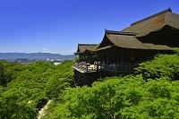 京都府 清水寺 清水の舞台