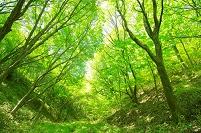 奈良県 葛城山 自然研究路