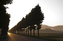 福井県 早朝の道