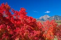 山梨県 紅葉と八ヶ岳