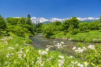 長野県 大出公園と白馬三山