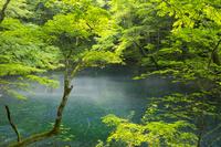 青森県 白神山地に点在する十二湖の沸壺の池