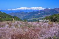 福島県 桜峠より飯豊連峰