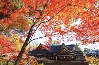 京都府 北野天満宮 もみじ苑の紅葉と本殿
