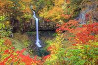 秋田県 紅葉の曽利滝