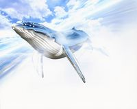 CG  クジラ