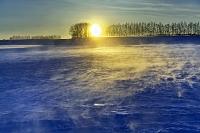 北海道 日の出のカラマツ並木と地吹雪 帯広市