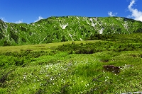 富山県 立山黒部アルペンルート 鏡石平 ワタスゲ 奥大日岳