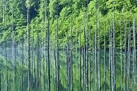 長野県 王滝村 自然湖