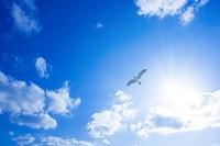 空と太陽とカモメ