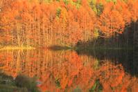 長野県 夕陽の御射鹿池