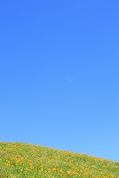 長野県 霧ヶ峰高原 ニッコウキスゲの花畑と青空