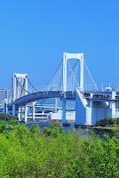 東京都 お台場よりレインボーブリッジ
