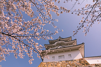 兵庫県 明石市 明石城・坤櫓と桜