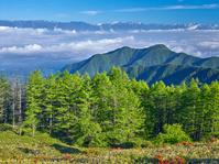 長野県 美ヶ原 レンゲツツジと雲海