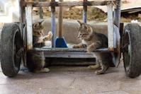 手押し車で遊ぶ二匹の子猫