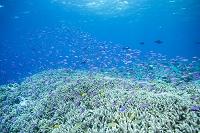 パプアニューギニア トゥフィ サンゴ礁の風景