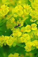 蟻と水滴のある花