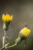 花に止まるイトトンボ