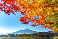 河口湖からの紅葉