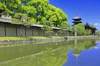 京都府 東寺 五重塔と南大門