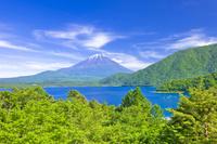 山梨県 富士山と本栖湖の新緑