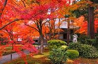 京都府 紅葉の三千院 宸殿