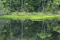 長野県 乗鞍高原 牛留池の新緑