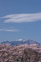 山梨県 北杜市 真原の桜並木と八ヶ岳