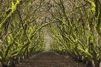 アメリカ合衆国 オレゴン州 果樹園