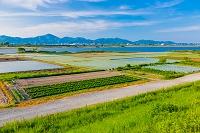 徳島県 吉野川沿いの水田と畑