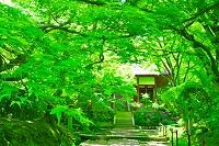 京都府 新緑の常寂光寺