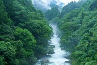 高知県 梼原川