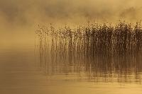 北海道 朝靄の阿寒湖とヨシ