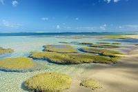 ハワイ カウアイ島 浅瀬のサンゴ礁