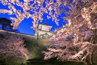 石川県 石川門と桜のライトアップ