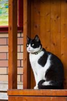 猫村 棚の上の黒白ネコ