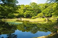 東京都 小石川後楽園 内庭