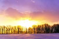 北海道 初日の出に染まる雪野原