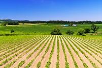 北海道 田園の丘の夏景色