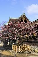 京都府 北野天満宮 紅梅と三光門