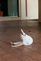 シンガポール 脚を伸ばす猫