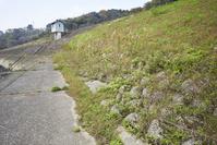 堤防法面の緑化