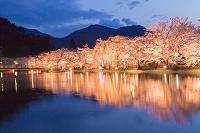 長野県 臥竜公園の夜桜