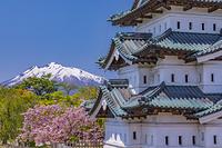 青森県 桜咲く弘前城と岩木山