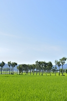 新潟県 夏井の田園風景