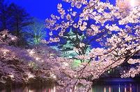 新潟県 高田夜桜