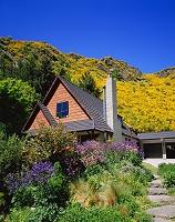 ニュージーランド・アロータウン ブルームの花と民家