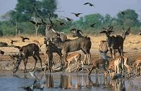 ボツワナ チョベ国立公園