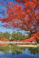 岩手県 毛越寺庭園の紅葉